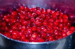Bowl of fresh cranberries Royalty Free Stock Image