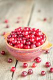 Bowl with fresh cranberries Stock Image