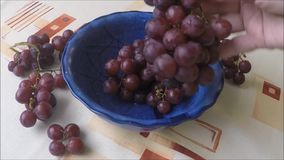 Bowl with fresh dark grapes stock video