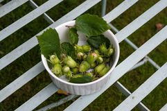 Hazelnuts on bench. Royalty Free Stock Photos
