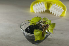 Bowl of fresh homemade cosmetics with fresh birch leaves. And massage tool not in fosuc stock image