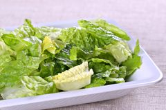Bowl of fresh lettuce Royalty Free Stock Photo