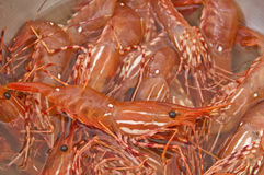 Bowl of Fresh live shrimp Stock Photography