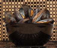Bowl of fresh mussels Royalty Free Stock Photos