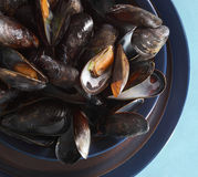 Bowl of fresh mussels Stock Image