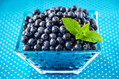 Bowl of  fresh picked blueberries Royalty Free Stock Image