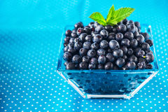 Bowl of  fresh picked blueberries Stock Images