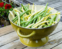 Bowl of fresh picked yellow and green beans Stock Photography