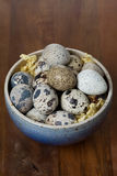 Bowl with fresh quail eggs Stock Photos
