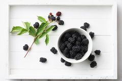 Fresh raspberries bowl in white wooden tray. Bowl of fresh ripe blackberries in white wooden tray, top view Royalty Free Stock Photo