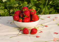 Bowl of fresh strawberries. On tablecloth Stock Images