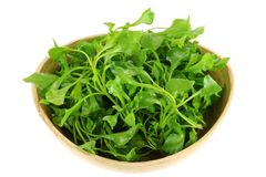 A Bowl of Fresh Watercress Royalty Free Stock Image