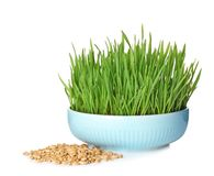 Bowl with fresh wheat grass and seeds. Isolated on white stock photography
