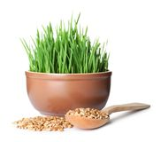 Bowl of fresh wheat grass with spoon and seeds on white royalty free stock photo