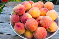 Bowl of fresh yellow peaches Stock Images