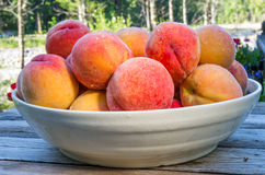 Bowl of fresh yellow peaches Royalty Free Stock Photography