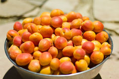 Bowl of Freshly Picked Apricots. A large steel bowl holds a bushel of freshly picked apricots in the morning sun Royalty Free Stock Photo