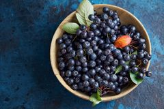 Bowl with freshly picked homegrown aronia berries. Royalty Free Stock Images