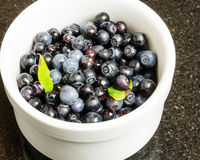 Bowl of freshly picked Huckleberries. White bowl of fresh Huckleberries Stock Image