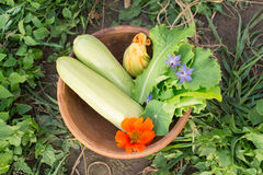 Bowl of freshly picked vegetables on the ground Stock Photo