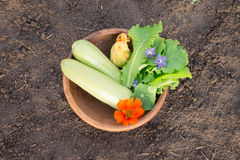 Bowl of freshly picked vegetables on the ground Stock Photos