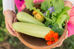 Bowl of freshly picked vegetables in kids' hands Royalty Free Stock Images
