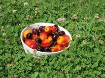 Bowl of fruit, southern Bohemia. Czech Republic Royalty Free Stock Image