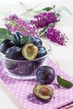 Bowl full of damson plums (Prunus insititia) Stock Photography