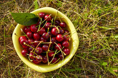 A bowl full of fresh cherries Stock Image