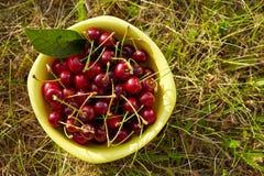 A bowl full of fresh cherries Stock Image