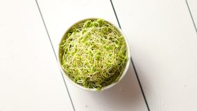 Bowl full of fresh radish sprouts placed on white wooden background