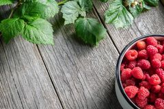 Bowl full of raspberry berries and leaves on wooden board. Top view. stock images