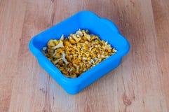 Bowl of fungus chanterelles Cantharellus cibarius Stock Photography