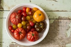 A Bowl of Garden Tomatoes royalty free stock images
