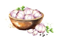 Bowl with garlic. Watercolor hand drawn illustration isolated on white background. Bowl with garlic. Watercolor hand drawn illustration isolated on white Royalty Free Stock Image