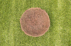 Bowl of green grass Stock Images