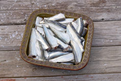 Bowl of gutted baltic herring Royalty Free Stock Photos