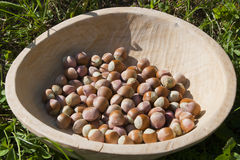 Bowl with hazelnuts. Rustic wood bowl with hazel nuts in green grass Royalty Free Stock Image