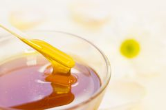 A bowl of honey with a camomile royalty free stock photo
