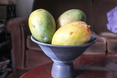 Bowl of large mangoes on table Royalty Free Stock Image