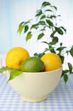 Bowl with  lemons on the table and green plants on background Royalty Free Stock Photography