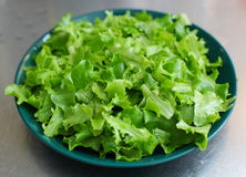 Bowl of lettuce Royalty Free Stock Photography