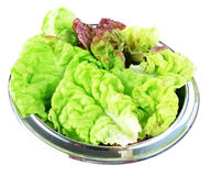 Bowl with  lettuce leaves Royalty Free Stock Images