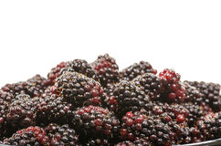 Bowl of Marionberries on white Royalty Free Stock Photos