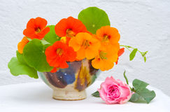 A bowl of Nasturtiums with pink rose. Royalty Free Stock Photography