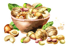 Bowl of nuts. Watercolor  illustration Stock Image