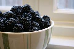 Free Bowl Of Blackberries 2 Stock Photos - 4213843