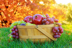 Bowl Of Thanksgiving Fruit Apples Pears Pomegranates Stock Image