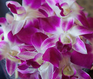 Bowl of Orchids in Hawaii Royalty Free Stock Images