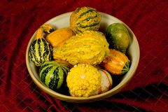 Bowl of Ornamental Squash. Photo of a bowl of ornamental squash on wine colored background stock image